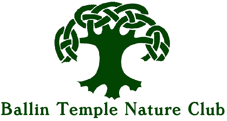 Ballin Temple Nature Club