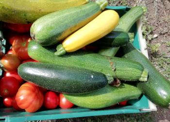 courgetteonbox